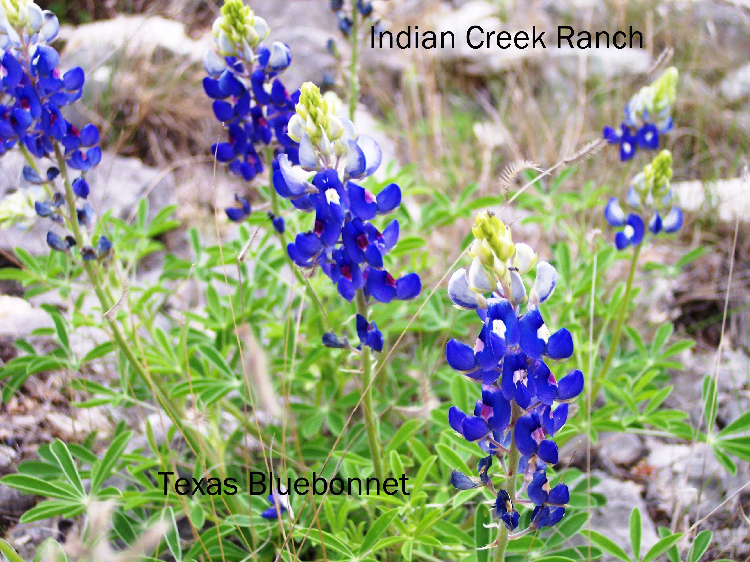 Gwen Lanning Indian Creek Ranch Page 2